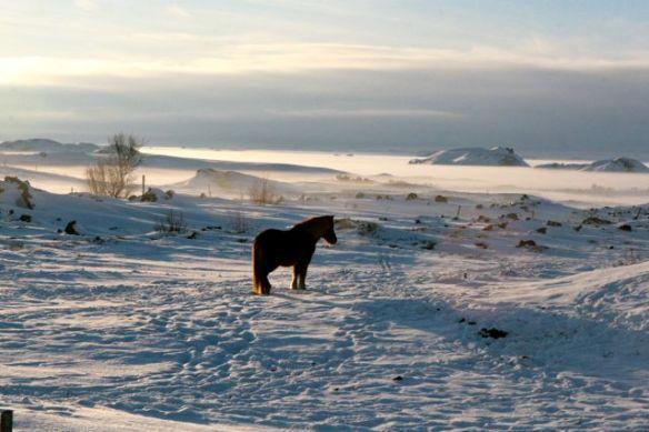 Cavalo Inslandês e Lago Myvátn