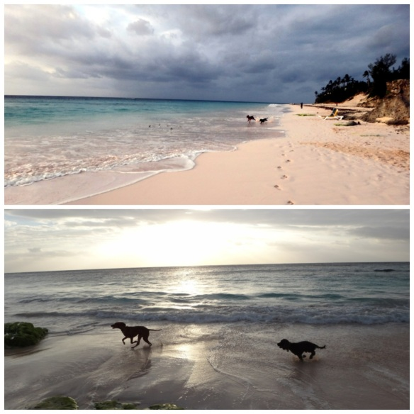 Sunrise - Elbow beach