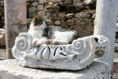 Cat Sultan